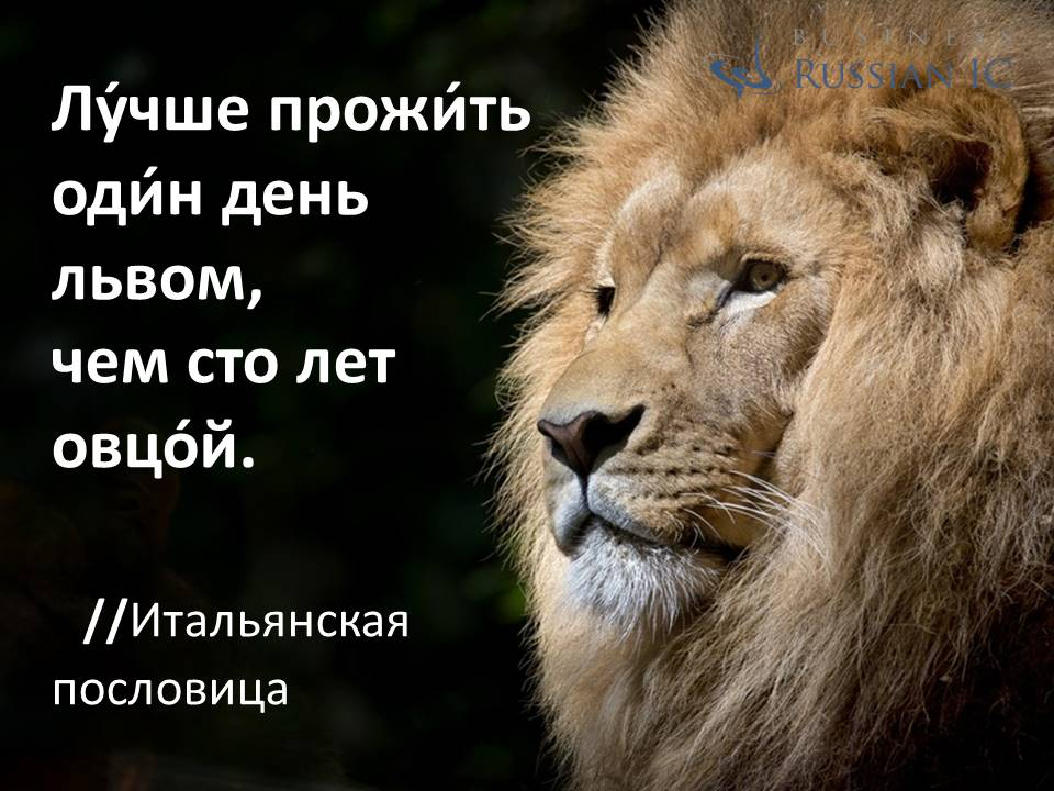 business Russian_aphorism_lion